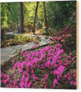 Early Morning In Honor Heights Park Wood Print
