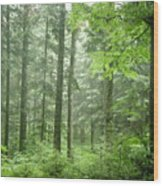 Early Morning In Swiss Forest Wood Print
