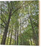 Early Morning In The Forest Wood Print