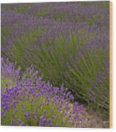 Early Morning Lavender Wood Print