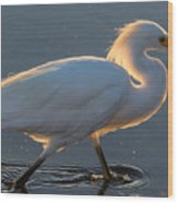 Early Morning Light On Egret Wood Print