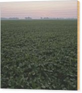 Early Morning Mist Over Soybean Fields Wood Print by Brian Gordon Green