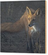 Early Morning Red Fox Prowl Wood Print