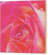 Early Morning Rose Wood Print