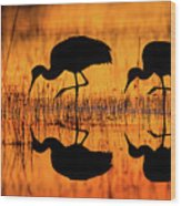 Early Morning Sandhill Cranes Wood Print