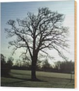 Early Morning Tree In Winter Wood Print