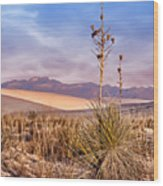 Early Morning Yucca - White Sands - New Mexico Wood Print