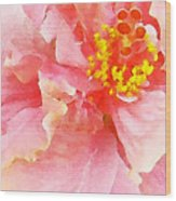 Early Pink Hibiscus Wood Print