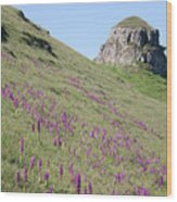Early Purple Orchids In The Derbyshire Dales Wood Print