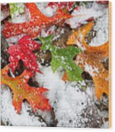 Early Snow During Autumn  Wood Print