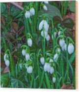 Early Spring Wood Print