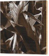 Ears To You Corn - Sepia Wood Print