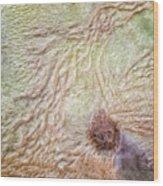 Earth Art 9495 Wood Print