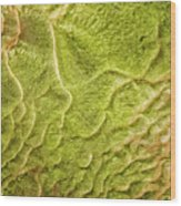 Earth Art 9516 Wood Print