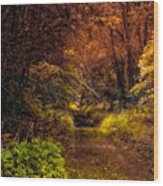 Earth Tones In A Illinois Woods Wood Print