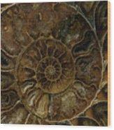 Earth Treasures - Brown Amonite Wood Print