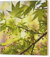 Earth Walk Wood Print