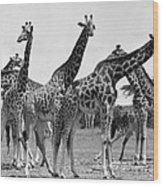 East Africa: Giraffe Wood Print