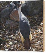 East African Crowned Crane Wood Print