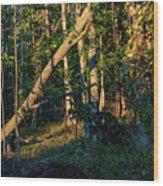 East Jordan 30 Wood Print