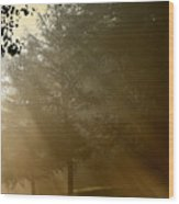 East Park Morning Wood Print