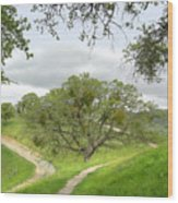 East Ridge Trail -  Spring Wood Print