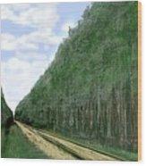 East Texas Pine Cut Wood Print