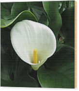 Easter Lily 2 Wood Print