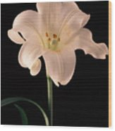 Easter Lily 3 Wood Print