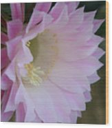 Easter Lily Cactus East 2 Wood Print