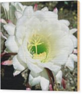 Easter Lily Cactus Flower Wood Print