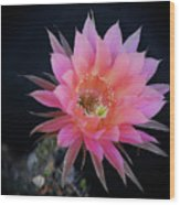 Easter Lily Cactus Wood Print