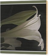 Easter Lily Card Wood Print