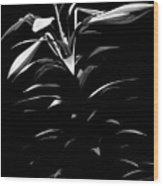 Easter Lily Two Wood Print