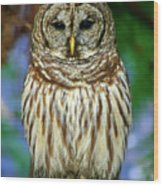 Eastern Barred Owl Wood Print