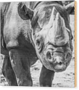 Eastern Black Rhinoceros Wood Print