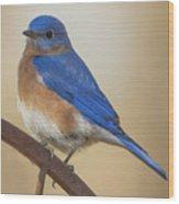 Eastern Blue Bird Male Wood Print