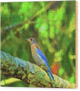 Eastern Blue Bird With Flair Wood Print
