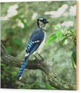 Eastern Blue Jay Wood Print