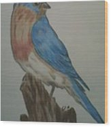 Eastern Bluebird Wood Print by Ginny Youngblood