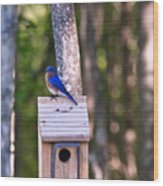 Eastern Bluebird Perched On Birdhouse 2 Wood Print