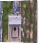 Eastern Bluebird Perched On Birdhouse 3 Wood Print