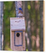 Eastern Bluebird Perched On Birdhouse 4 Wood Print