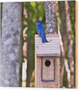 Eastern Bluebird Perched On Birdhouse Wood Print