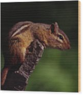Eastern Chipmunk On Stump Wood Print