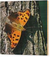 Eastern Comma Butterfly Wood Print