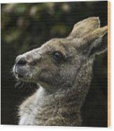 Eastern Grey Kangaroo Wood Print