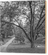 Eastern Kentucky University The Ravine Wood Print by University Icons