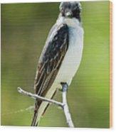 Eastern Kingbird Stare Wood Print