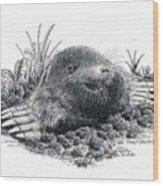 Eastern Mole Wood Print